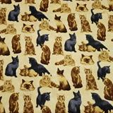 My Pet Family - Cats - Paintbrush Studio